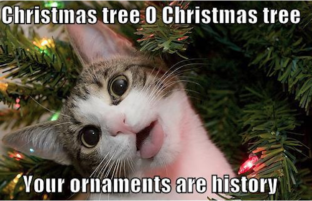 21 of the Funniest Christmas Memes for the Holidays - LDS S.M.I.L.E.