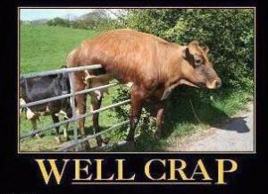 Hilarious memes funny posts lol humor (12)