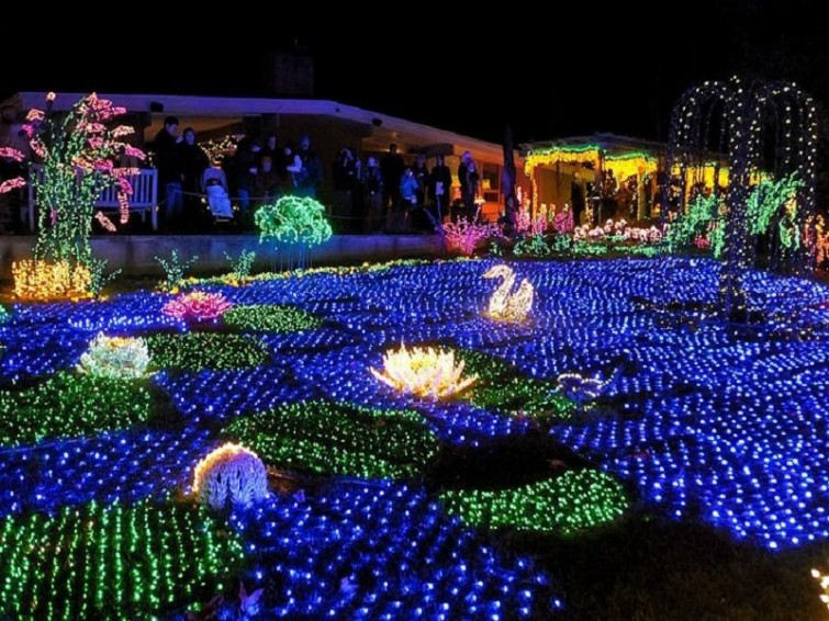 Awesome Christmas lights (20)