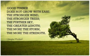 good timber quote ease