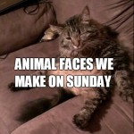 11 Animal Faces That We Make on Sundays