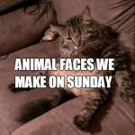 11 Animal Faces That We Make on Sundays
